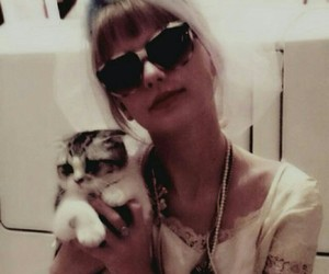 Taylor Swift, meredith, and cat image