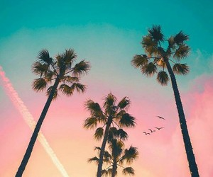 palm trees, summer, and amazing image