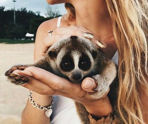 animal, cute, and summer image