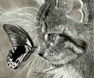 cat, butterfly, and drawing image