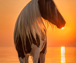 horse, sunset, and animals image