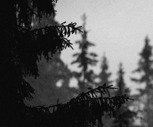 alternative, forest, and black and white image
