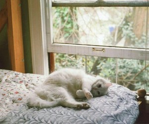 cat, bed, and window image