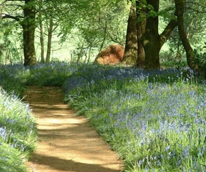 path, spring, and flowers image
