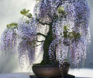 beautiful, bonsai, and garden image