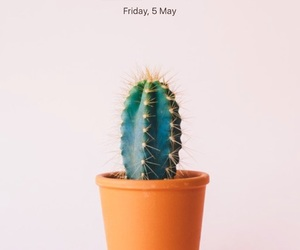 apple, background, and cactus image