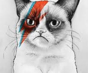 cat, david bowie, and art image