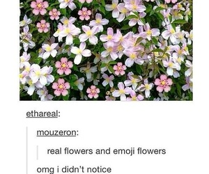 flowers, tumblr, and funny image