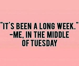 tuesday, funny, and quotes image