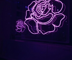 rose, purple, and flowers image