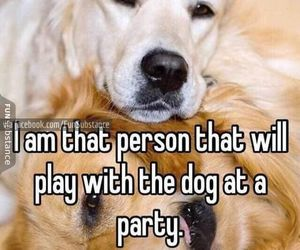 party, dog, and funny image