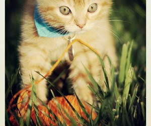 baby cat, beautiful, and cat eyes image
