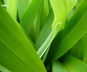 color, green, and leaves image