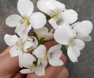amazing, flowers, and white image
