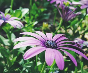 flowers, lavender, and photographer image