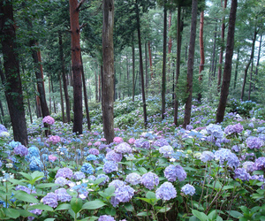 flowers, forest, and wild image
