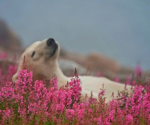 flowers, bear, and nature image