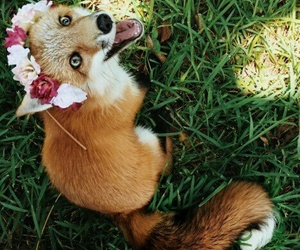 fox, indie, and summer image