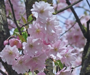 beauty, bloom, and pink image