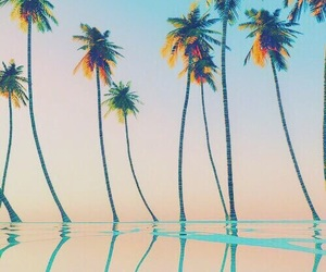 beach, palm trees, and relaxation image