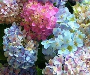 flowers and hydrangeas image