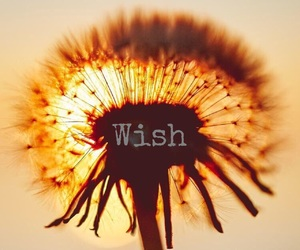 easel and wish image