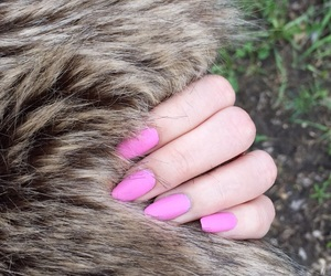 animals, baby pink, and claws image
