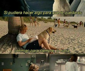 dog, love, and frases image