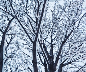 cold, snow, and trees image