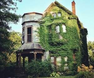 house and ivy image
