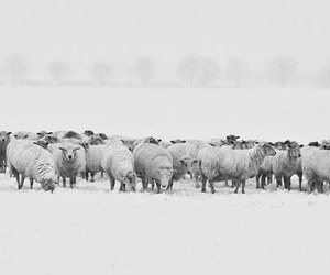 animals, winter, and cold image