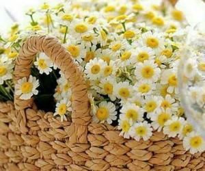 flowers, good morning, and yellow image