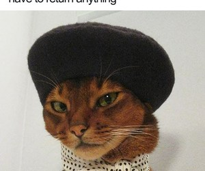 cat, looking good, and meow image