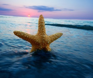 ocean and sea star image
