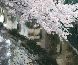 japan, sakura, and water image