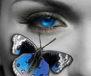 butterfly, beauty, and blue image