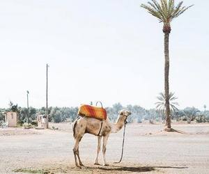 holiday and marrakech image