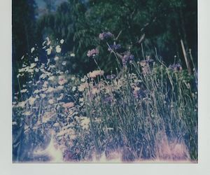 flowers and polaroid image