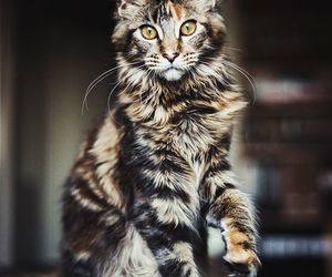 cat and gorgeous image