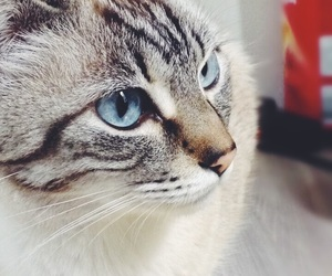 animal, blue, and blue eye image