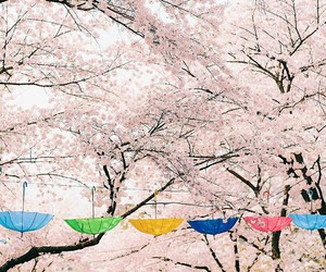 colors, umbrella, and japanese image