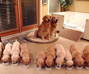 adorable, dogs, and family image