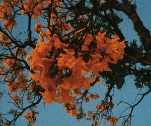 orange, blue, and flowers image