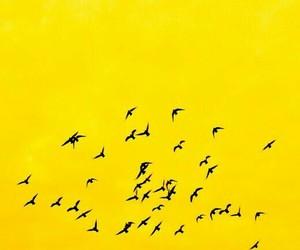 yellow, bird, and aesthetic image