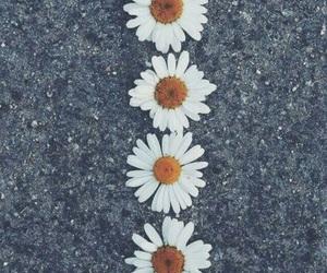 flower, margaritas, and wallpaper image