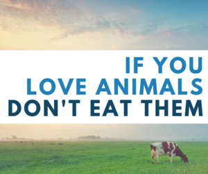 animal rights, meat, and vegan image