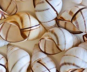 sea and shells image