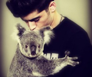 zayn malik, one direction, and Koala image