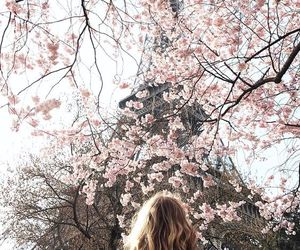 flowers, beautiful, and paris image