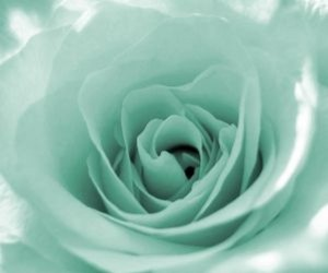 mint, flower, and rose image